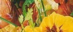 Savourez la Salade Folle de Michel Guérard