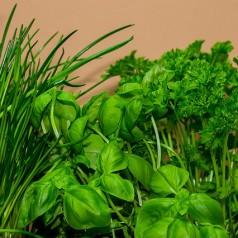 Quels aromates faire pousser dans sa cuisine en hiver ?
