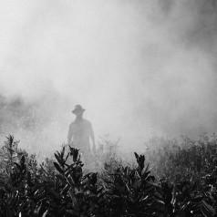 Connaissez-vous les gestes pour enlever les pesticides de vos aliments ?