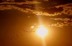 Le soleil arrive ! Voici 5 idées de plats froid