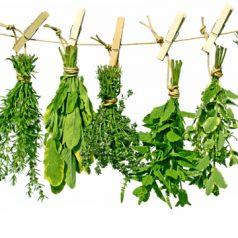 5 herbes à utiliser en cuisine