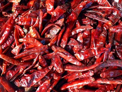 Piment chile ou chili mexicain