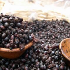 Insectes la cuisine de demain - Insectes dans la cuisine ...