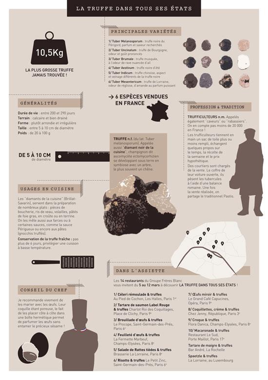 infographie sur les truffes