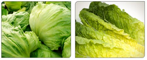 foodreplacement_11_romaine