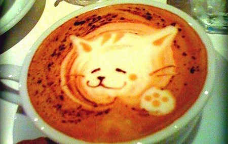 chat-mousse-cafe