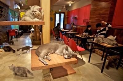 A-Cat-Cafe